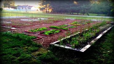 Garden A early 2015