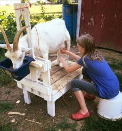 c-milking-agatha