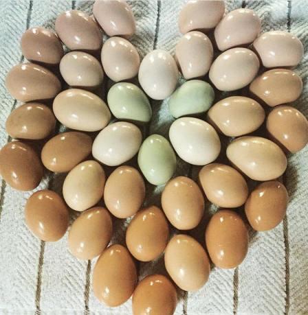 egg-heart