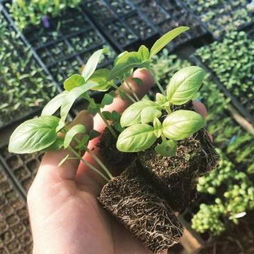 herb-plants2