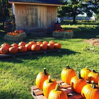 big pumpkins store front