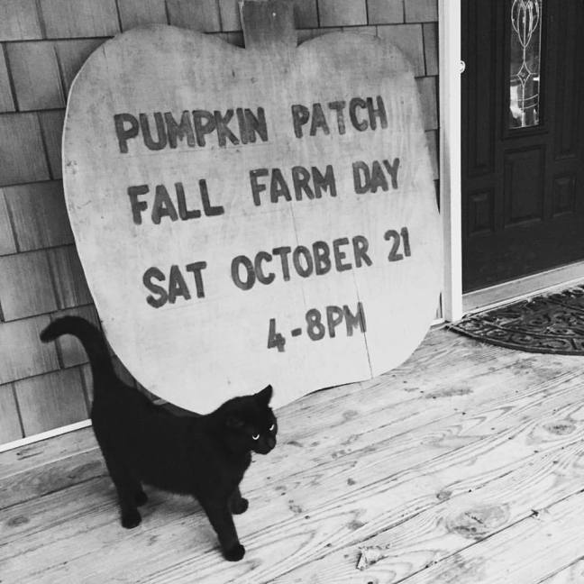 farm day sign with cat